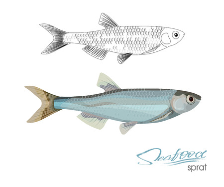 Sprat sketch vector fish icon. Isolated marine atlantic ocean sprats. Linear silhouette sea fish. Isolated symbol for seafood restaurant sign or emblem, fishing club or fishery market Vettoriali