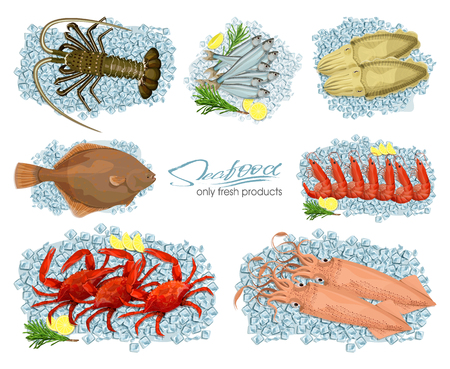 Seafood in cartoon style. Vector illustrations squid, cuttlefish, crab, shrimp, spiny lobster, flounder, sprat on ice cubes isolated on white background. Icons. Set.