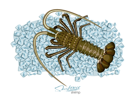 Spiny lobster on ice cubes in cartoon style. Fresh spiny lobster. Seafood product design. Inhabitant wildlife of underwater world. Edible sea food. Vector illustration