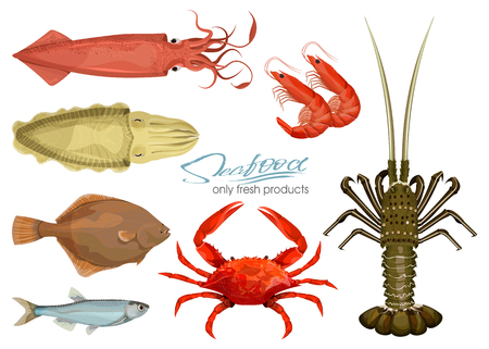 Seafood in cartoon style. Icons. Vector illustrations. Set squid, cuttlefish, crab, shrimp, spiny lobster, flounder fish, sprat isolated on white background. Inhabitant wildlife of underwater world. Stock Vector - 102250803