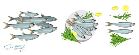 Sprat sketch vector fish icon. Vector image of ocean sprat. Isolated marine atlantic ocean sprats with rosemary and lemon on a plate. Sprat, lemon, rosemary separately on a white background Иллюстрация