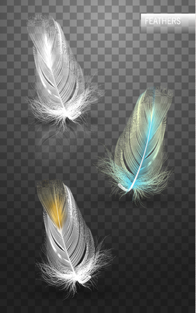 Isolated falling fluffy twirled feathers on transparent background in realistic style vector illustration