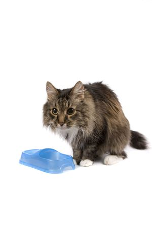 pussy cat: The cat eats from an empty bowl. Pussy cat want to eat. Pet cadge a meal.  Isolated on a white background. Stock Photo