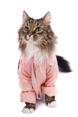 The cat clothed pink bathrobe. Pussy cat in bathrobe.  Isolated on a white background. Stock Photo