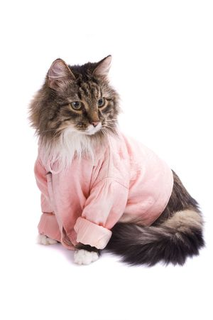 pink pussy: The cat clothed pink bathrobe. Pussy cat in bathrobe.  Isolated on a white background. Stock Photo