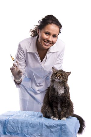 Vaccination. Pretty vet with syringe and feline subject.  Veterinarian have a medical examination a cat. White background.