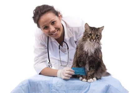 Pretty vet and feline subject. (focus on cat) Veterinarian have a  medical examination a cat with sore leg. White background.