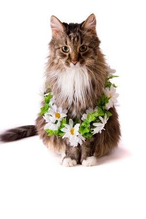 Cat with garland is sitting on white background Foto de archivo