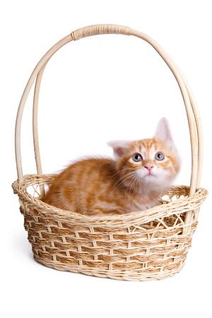Frightened little kitten  in straw basket