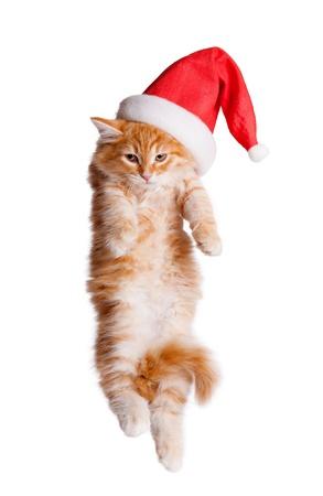 Small kitten in a santa hat