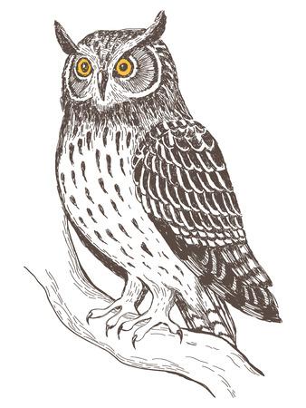 Realistic grafic image of owl, vector illustration Illustration