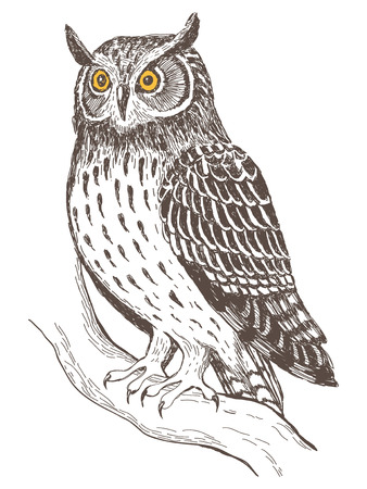 to engrave: Realistic grafic image of owl, vector illustration Illustration