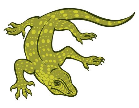 Varan vector illustrarion