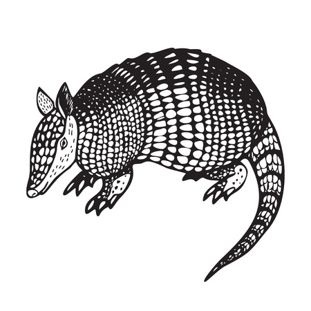 Armadillo hand drawn vector illustration in black and white Vector