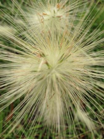 野生植物 写真素材