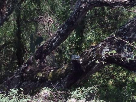 Cactus on a tree Stock fotó