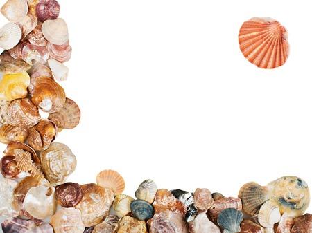 Seashell on white background isolated frame