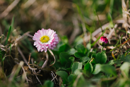 Fresh spring grass with flowers on a sunny day with natural blurred background Stock Photo
