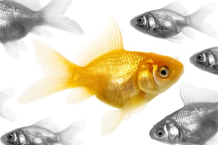 Isolated of the gold fish on white Stock Photo - 1005073