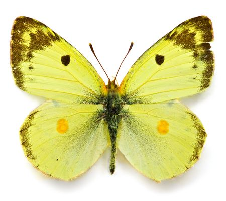 Close up view of the yellow batterfly