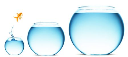 Ein Goldfisch, springen aus dem Wasser, um Freiheit zu entkommen. Weißer Hintergrund.  Standard-Bild - 5931399