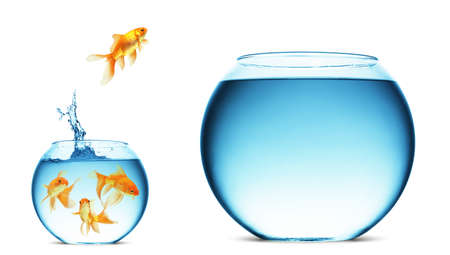 gold fish bowl: A goldfish jumping out of the water to escape to freedom. White background.