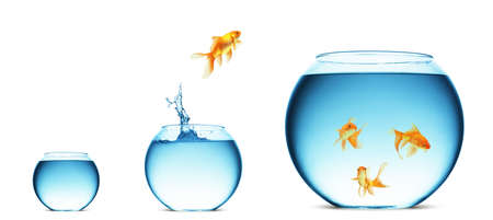 goldfish bowl: A goldfish jumping out of the water to escape to freedom. White background.