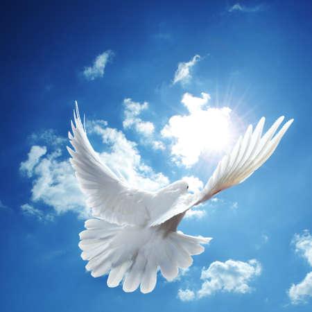 simbolo paz: Dove en el aire con alas abiertas en frente del cielo azul  Foto de archivo