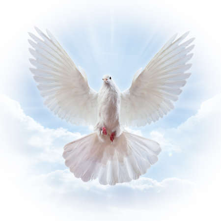 Dove in the air with wings wide open in-front of the sun Stock Photo - 7478309