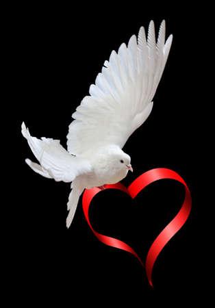 espiritu santo: Una paloma blanca vuelo libre, aislada en un fondo negro  Foto de archivo