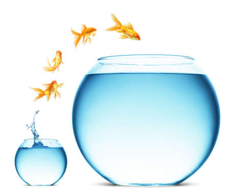 glass of bowl: A goldfish jumping out of the water to escape to freedom. White background.