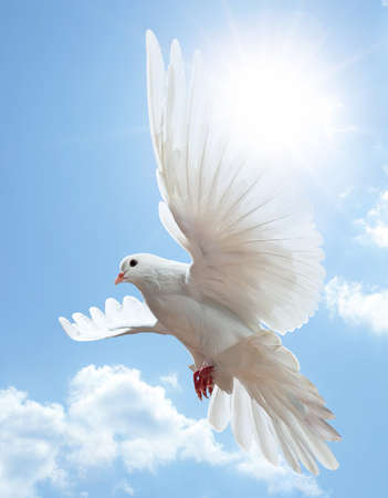 symbols of peace: Dove in the air with wings wide open in-front of the sun