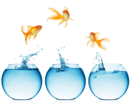 goldfish: A goldfish jumping out of the water