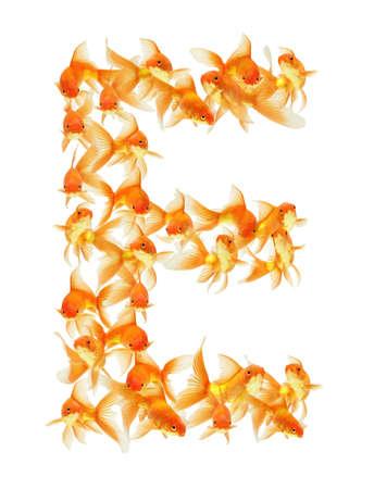 alfabeto con animales: Carta de alfabeto de peces de oro aislado en blanco