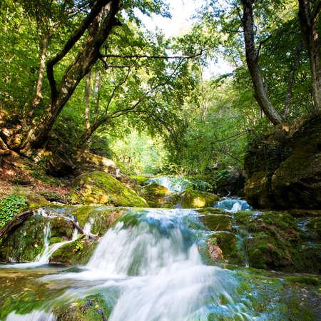 foamy: Foamy waterfall in a forest. Stock Photo