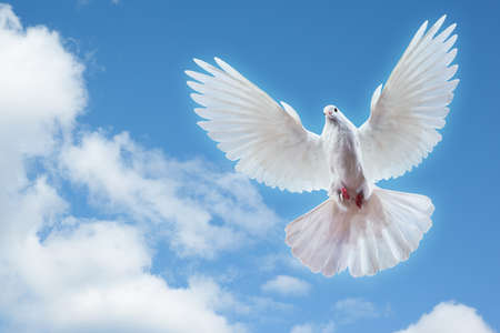 spread: Dove in the air with wings wide open in-front of the sun