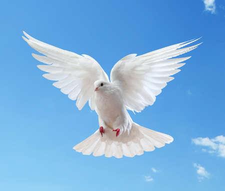 simbolo della pace: Colomba in aria con le ali aperte in fronte del sole Archivio Fotografico