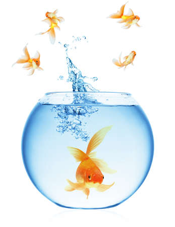 A goldfish jumping out of the water to escape to freedom. White background. Stock Photo - 7611921
