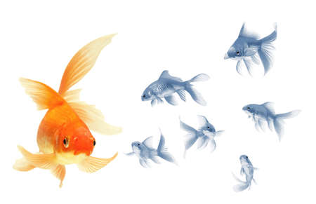 gold fish isolated on white Stock Photo - 7611884