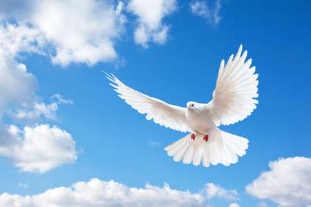 paloma de la paz: Dove en el aire con alas abiertas en frente del cielo azul  Foto de archivo