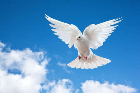Dove in the air with wings wide open in-front of the sun photo