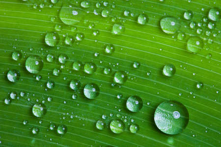 background of water drops on a green leaf. photo