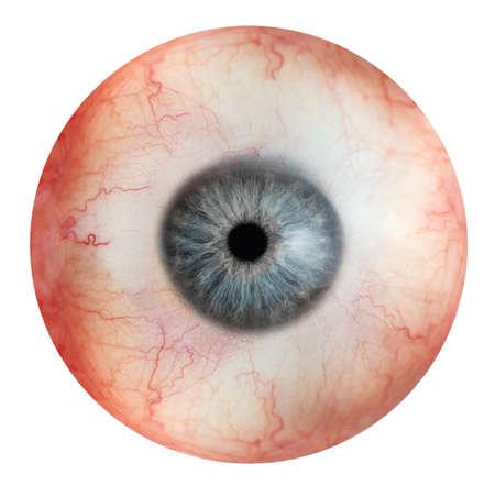 Close up vista del bulbo oculare