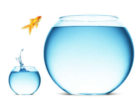 fish tank: A goldfish jumping out of the water to escape to freedom. White background.