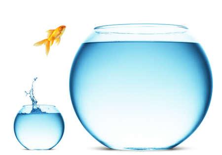 peces de colores: Un pez saltando fuera del agua para escapar a la libertad. Fondo blanco.
