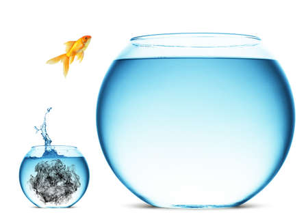 aquarium tank: A goldfish jumping out of the water to escape to freedom. White background.
