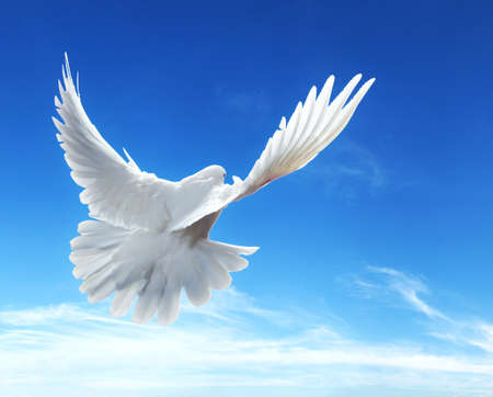 Dove in the air with wings wide-open