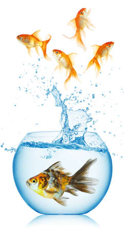 A goldfish jumping out of the fishbowl isolated photo