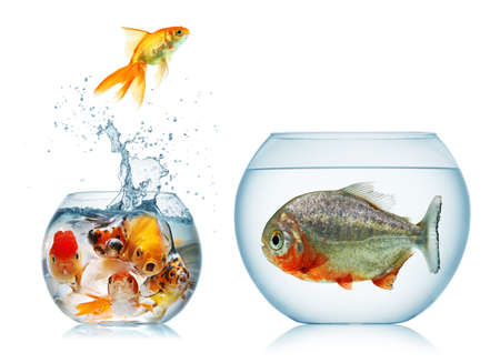 fish bowl: A goldfish jumping out of the water to escape to freedom  White background  Stock Photo
