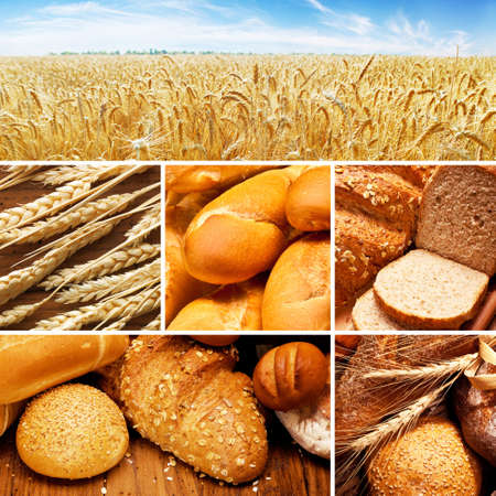 fresh baked: collage of assortment of baked bread on wood table